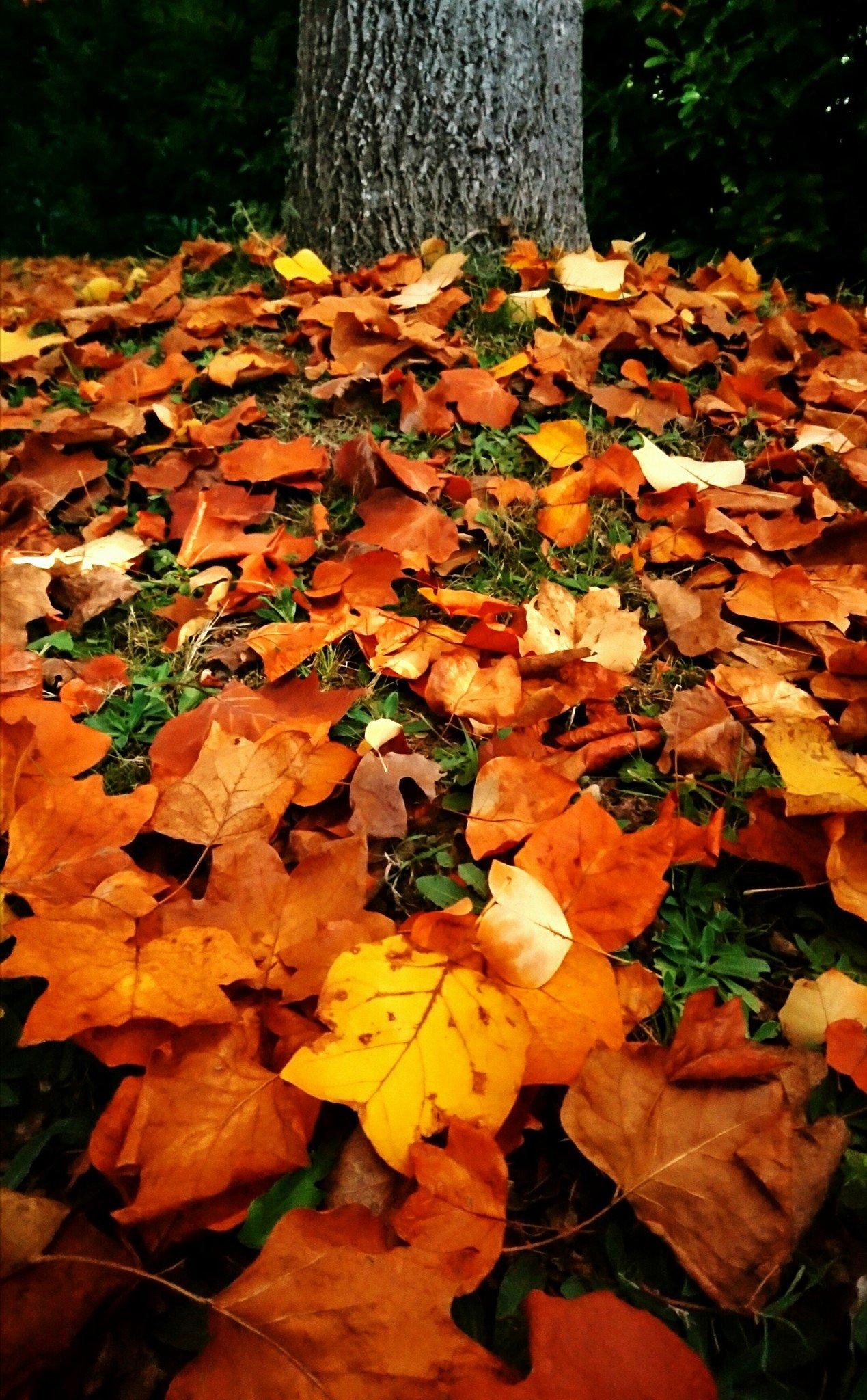 Novembre jardin de luchane - Jardin novembre ...