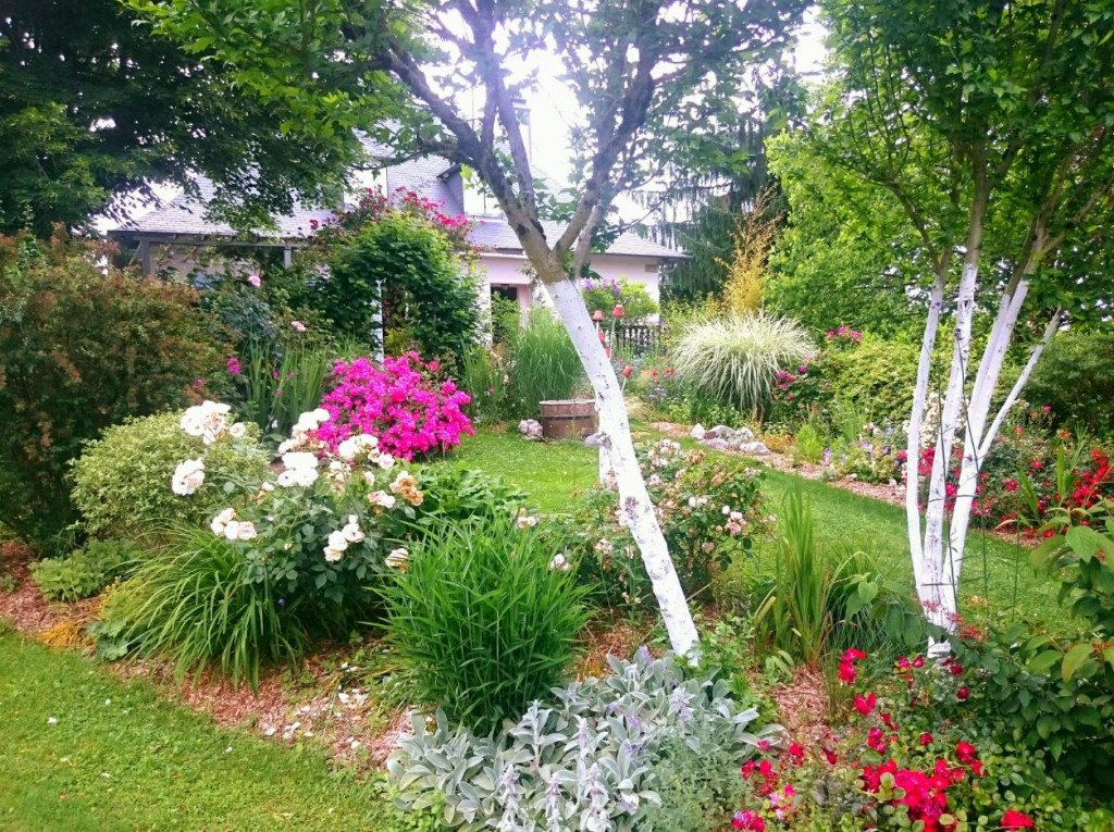 Les troncs blanchis accompagnent les rosiers en mai et juin, dans une ambiance toute romantique et apaisante.